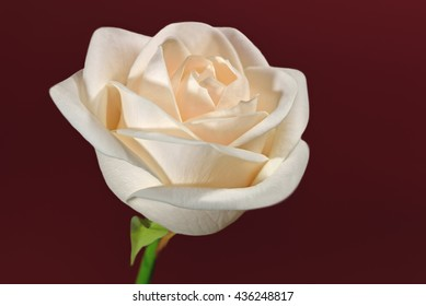 Closeup of a cream-colored rose positioned to the right against a red background.