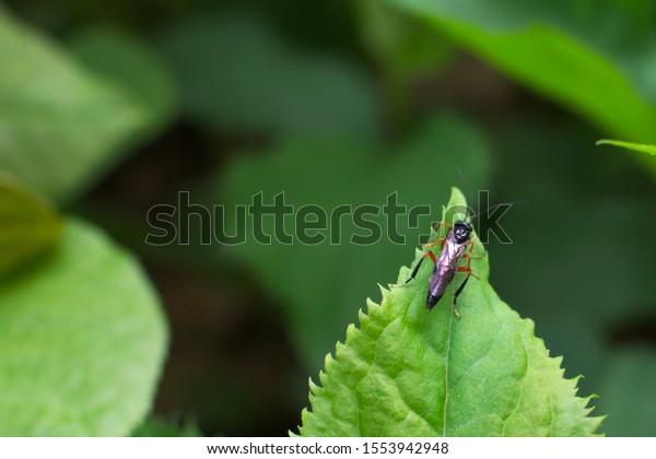 Closeup of cricket on a leaf