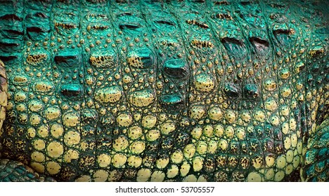 Close-up of crocodile skin - abstract organic texture background