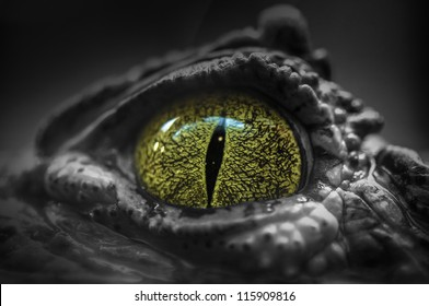 Close-up of Crocodile's Eye