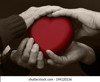 Closeup, cropped, isolated black white picture, hands senior, elderly people, woman, man, grandparents holding red heart. Human emotions, attitude. Old people health. Love, compassion, mother, father