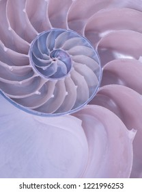 Closeup of cross section of a Nautilus shell in pastel blue and red colors
