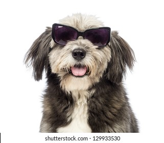 Close-up of a Crossbreed, 4 years old, wearing sunglasses in front of white background