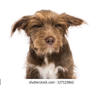 Close-up of a Crossbreed, 5 months old, with closed eyes, disgusted against white background