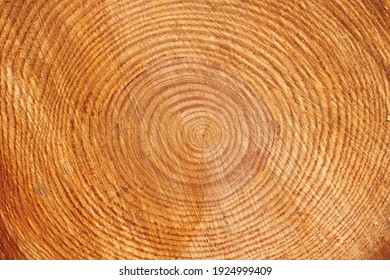 Close-up of a cross-section of a tree trunk.Texture of a cut tree with annual rings.Tree trunk cutaway.Wood texture background