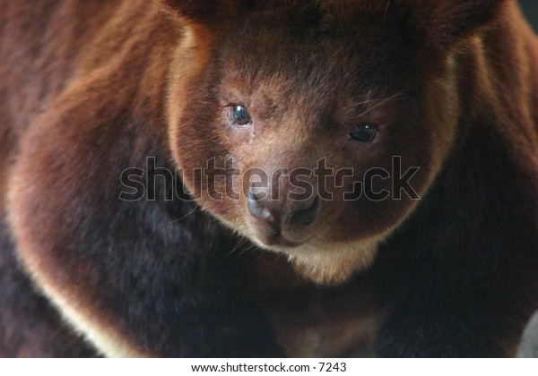 close-up of a cute brown animal