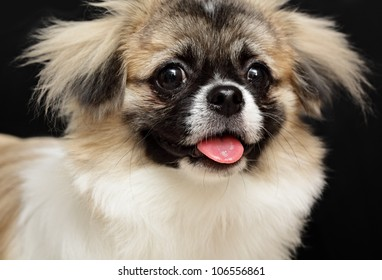 Close-up of cute dog