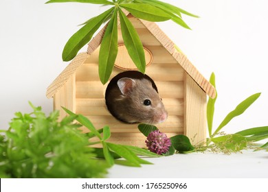 Close-up of a cute hamster in a house. Keeping and caring for animals - Shutterstock ID 1765250966
