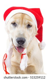 closeup of a cute labrador retriever wearing santa claus hat isolated on white background