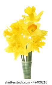 Closeup of Daffodil flower arrangement against white