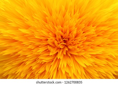 Closeup dahlia flower background. Beautiful yellow dahlia