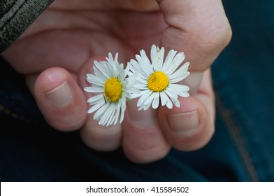 closeup of  of daisies in hand