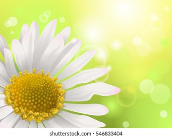 Close-up of a daisy, illustration, spring background