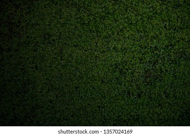 Close-up dark green leaves wall background