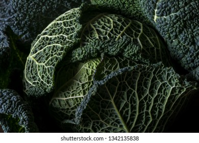 Closeup of dark Savoy cabbage leaves