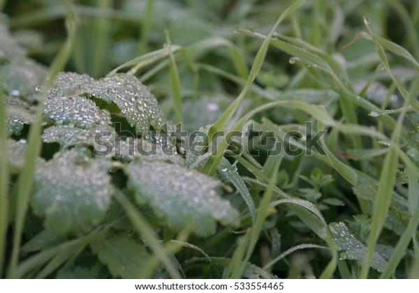 Close-up of dark, wet foliage and grass.