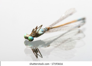 close-up of a dead dragonfly on a glass surface with reflection