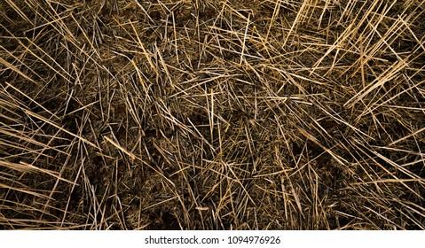 Closeup of dead grass in a field