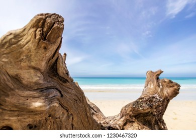 Closeup of a deadwood in Andaman beach with crystal clear beach in the background