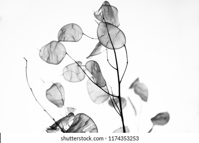 closeup of decorative foliage selective focus black and white