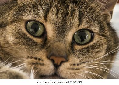Close-up of a deep cat's eyes