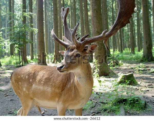 Closeup of a deer in the forest