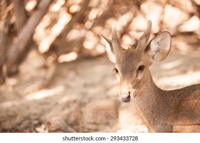 Close-up deer in wild nature.