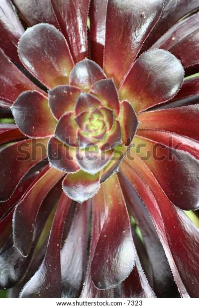 close-up of desert cactus