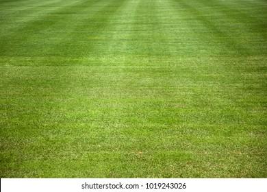 Closeup detail of the green grass field