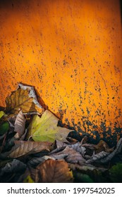 Closeup detail of many fallen dried  decorative autumn leaves on the ground outside in various different natural colors against a rustic vibrant saturated orange wall in warm sunlight, with copy-space