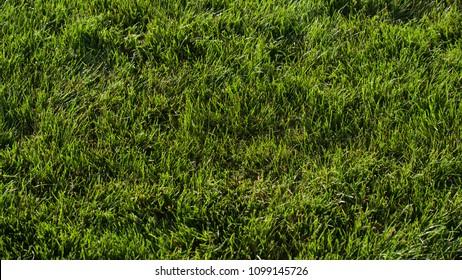 Blue Grass Images Stock Photos Vectors Shutterstock