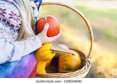 Close-up detail shot of a kid holding pumpkin in hands outdoors. Wicker basket full of pumpkins