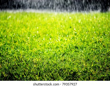 Closeup detail of texture in green grass lawnwith rain falling on it