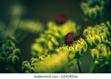 Close-up detailed photo of orange and black striped Minstrel bug on a wildflower against green natural background.