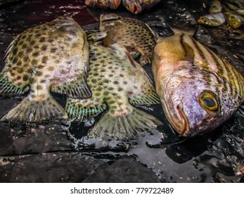 closeup of different kinds of Indian fish on the fish market in India