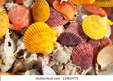 Closeup of different seashells and scallops.