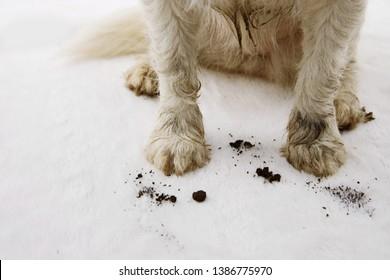 CLOSE-UP DIRTY AND MUDDY DOG CARPET AT HOME.