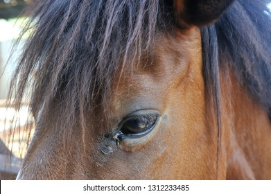 Closeup of discharge in horse's eye.