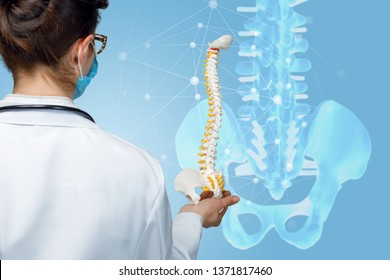 A closeup of a doctor standing backside and holding an artificial spine model against the digital model of pelvis unite with spinal joints.
