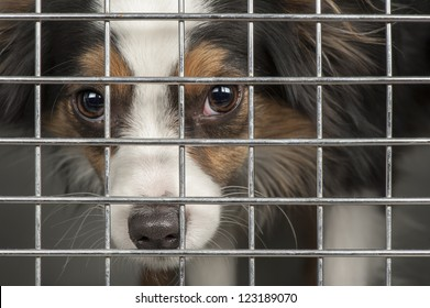 Closeup of a dog looking through the bars of a cage