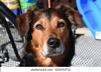 closeup of a dog in Norway at Nyksund