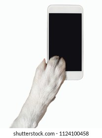 Close-up of dog paw touching the screen of a phone with copy space and isolated. Dog breed is Border Collie