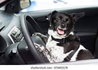 Close-up Of A Dog Sitting Inside Car