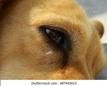 Closeup dog's eye