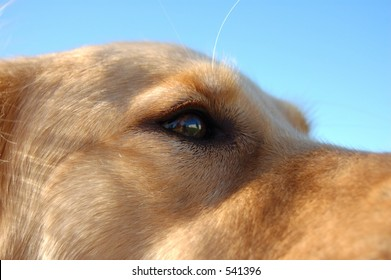 Closeup of dog's eye.