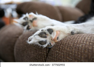 A closeup of a dogs paws