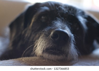 Close-up of a dog's wet nose in the foreground, head is blurred