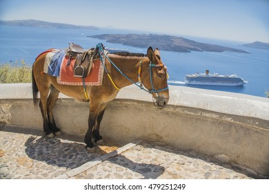 closeup donkey in Greece, Santorini, standing on the street in the background of the sea and the ship