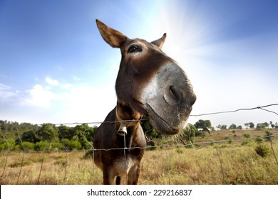 Closeup of a donkey on the field/Donkey