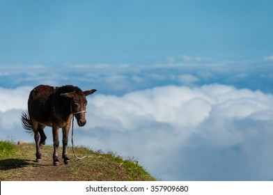 Closeup Donkey standing sideways on mountain above the clouds of cape verde island